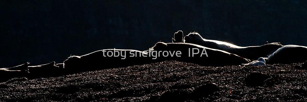 Seals Sunning by toby snelgrove  IPA