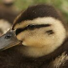 Baby Duckling by Franco De Luca Calce