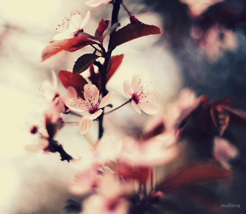 . by muflena