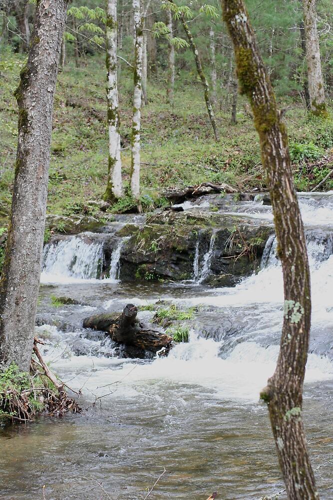 Little Mountain Stream by Lori Walton