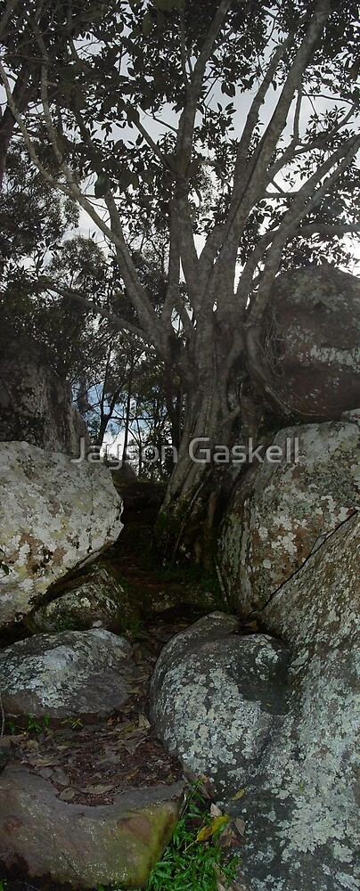 Tree by Jayson Gaskell