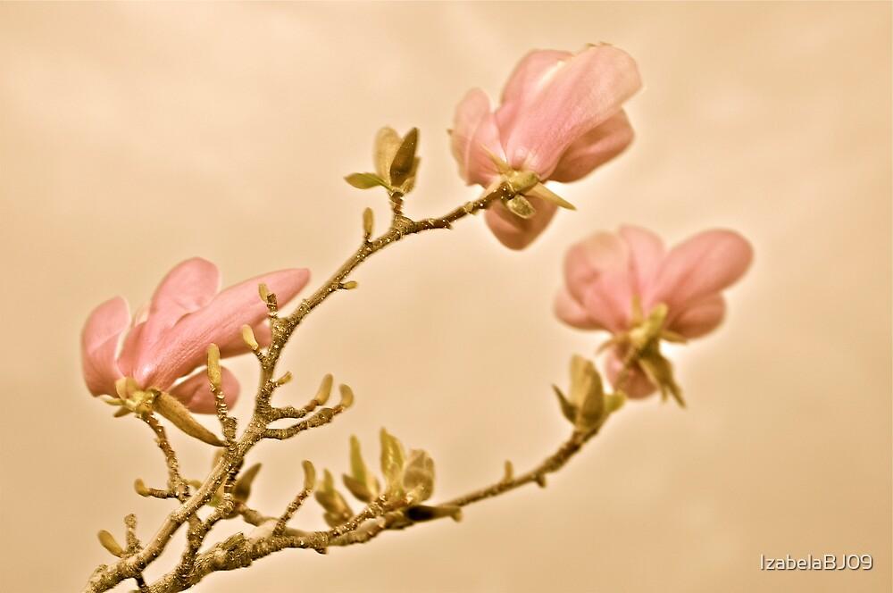 Magnolia  by IzabelaBJ09