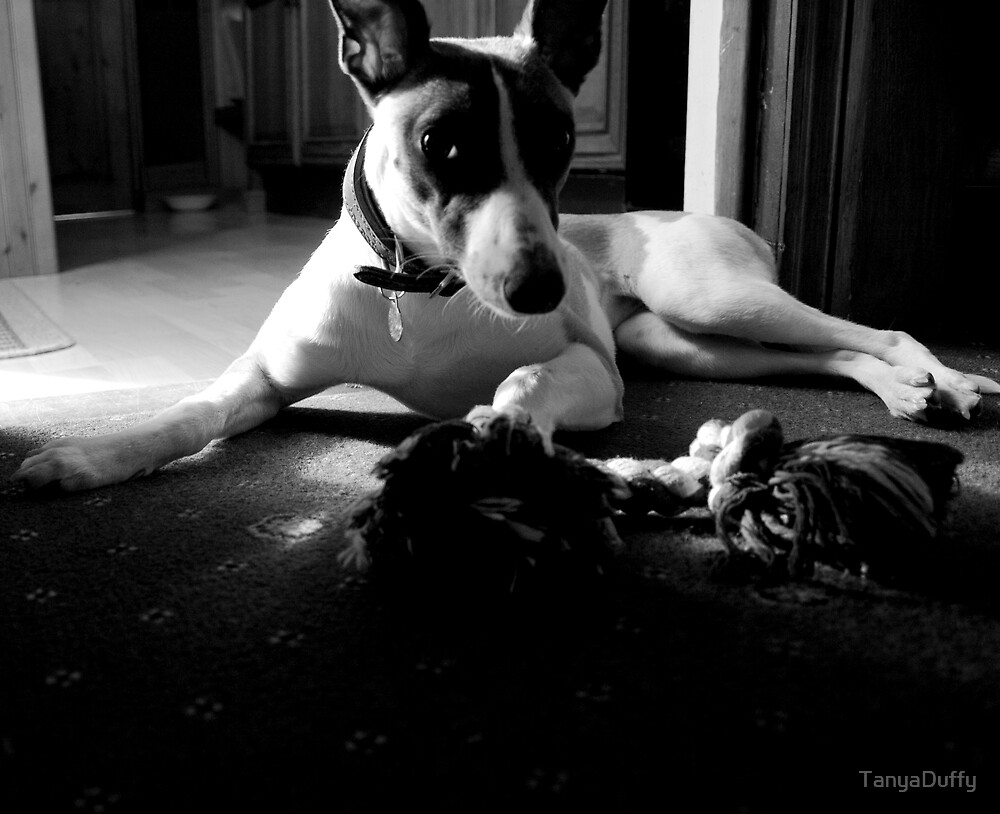 Whippet by TanyaDuffy