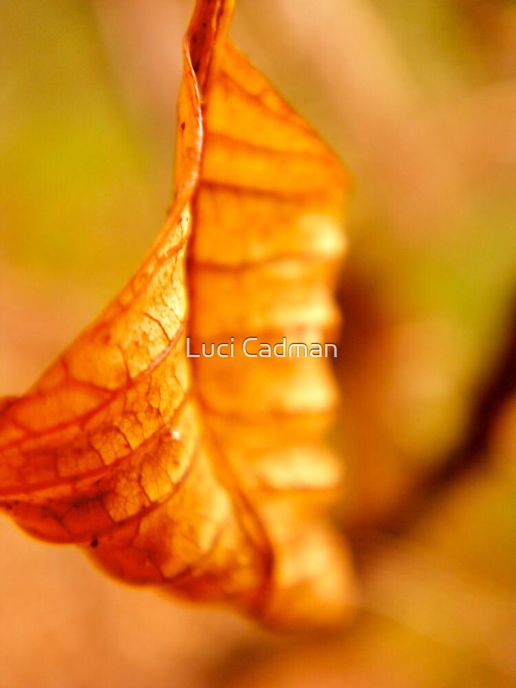 Autumn burn by Luci Cadman