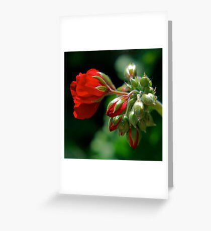 Geranium Greeting Card