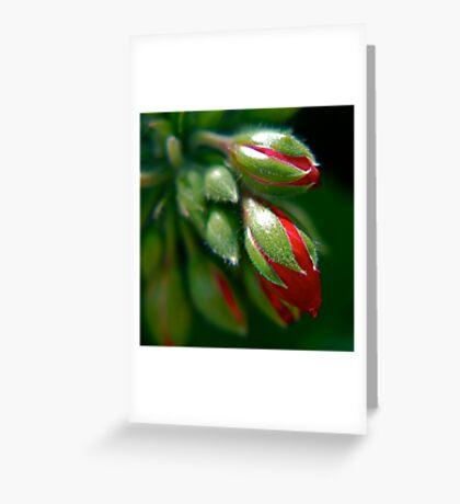 Geranium Buds Greeting Card