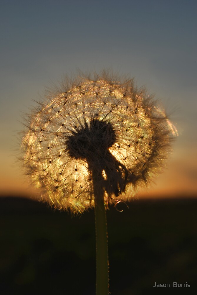 A Dande of a Sunset by Jason  Burris