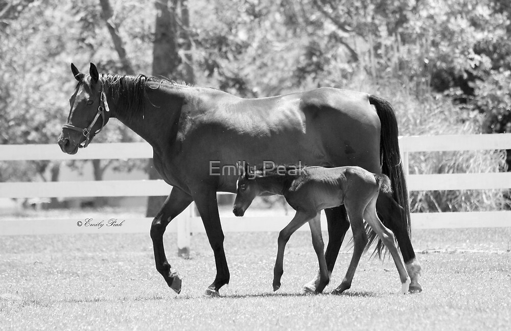 Mare and Foal at Trifecta by Emily Peak