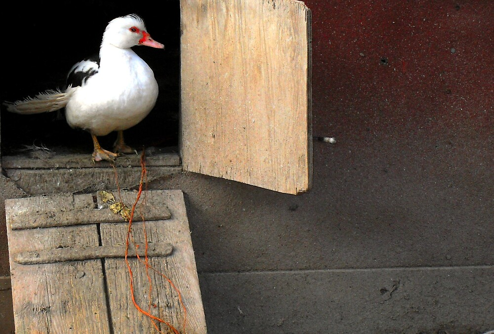 Ducky! by introspectionx