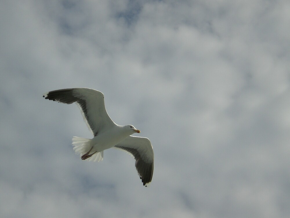 Sea Gull by introspectionx