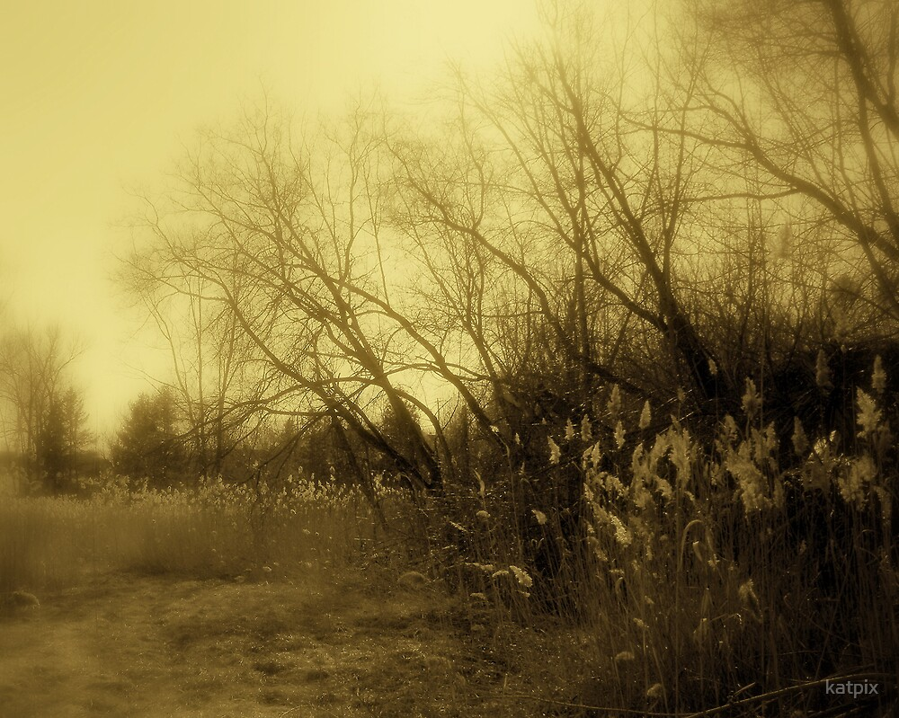 Swamp Land by katpix