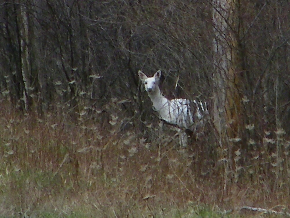 Seneca White Deer by irishpatti