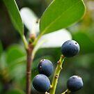 Berries by PsiberTek