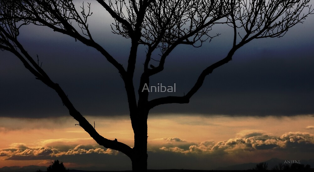 Peace in the Valley...  by Anibal