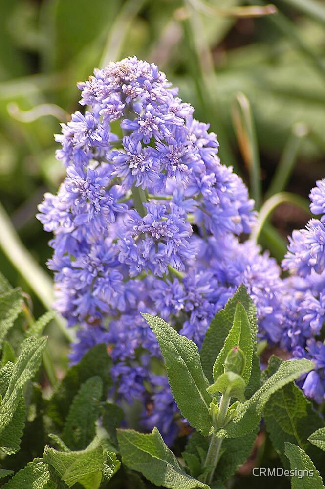 Purple flowers by CRMDesigns