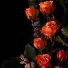 Orange Rose Belle Noir Large 1644 by Candy Paull
