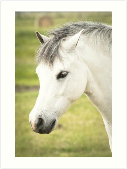 White Pony by diamonddove