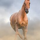 Beautiful chestnut horse front view  by marusya1