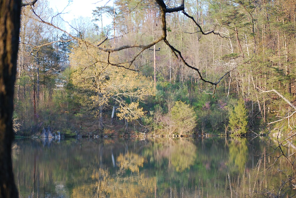 COVE LAKE REFLECTIONS TN  by Michelle BarlondSmith