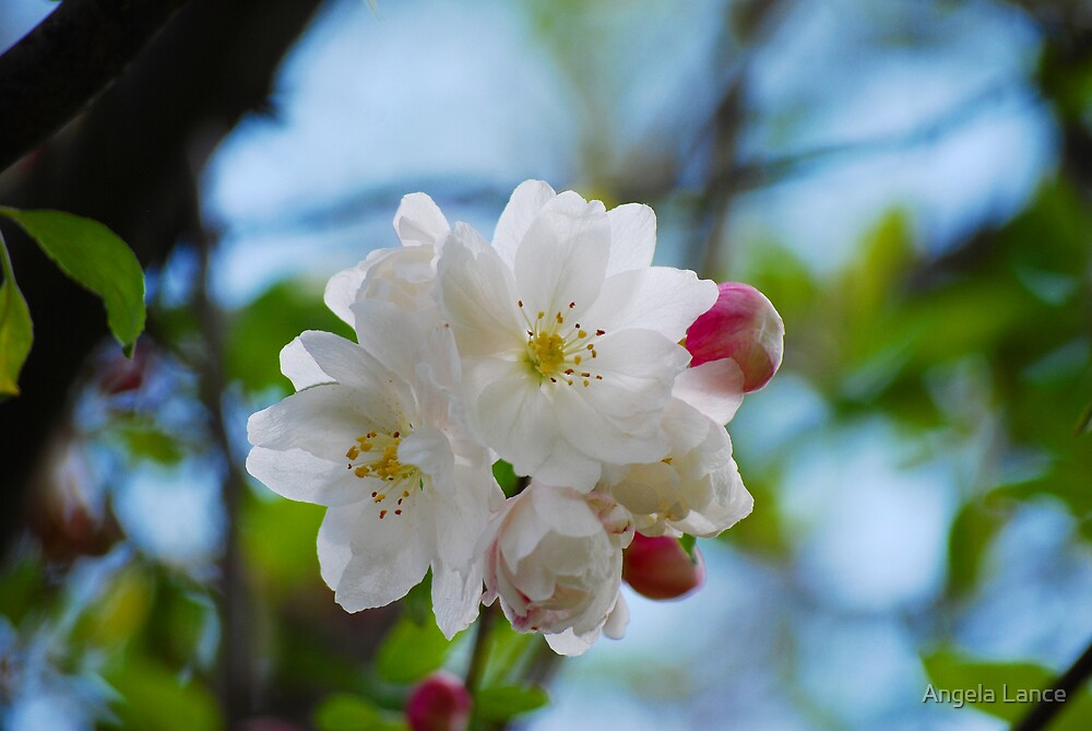Flowering Tree... by Angela Lance