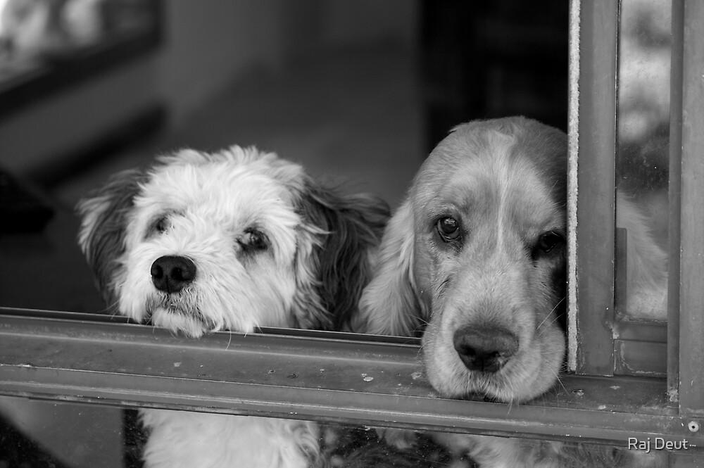 Dogs in waiting by Raj Deut
