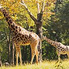 Mama Giraffe by jenndes
