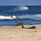 Bird on a Seaside Branch by Graham Mewburn