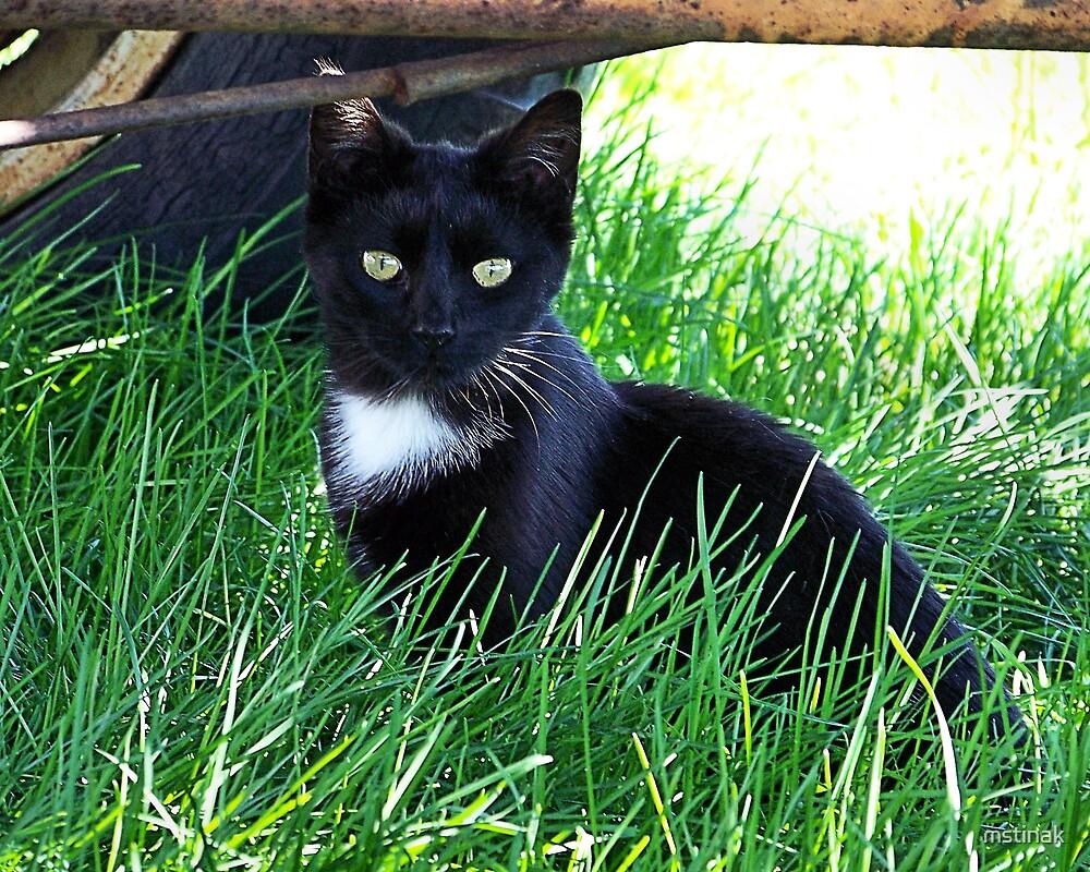 Farm Cat 1 by mstinak