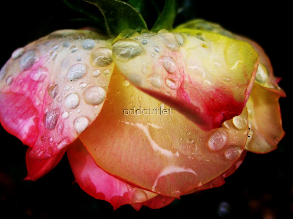 rose drops by oddoutlet