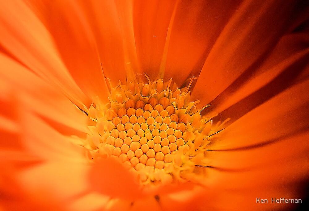 SunShine flower by Ken  Heffernan