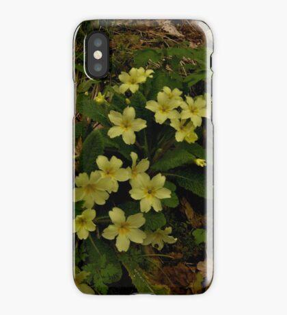 Primrose, Drumlamph Wood, County Derry iPhone Case
