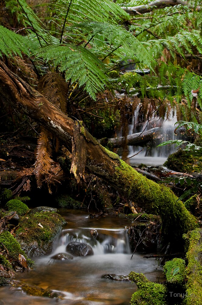 Cement Creek Cascades by Tony Lin