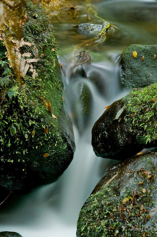 Cement Creek Cascade by Tony Lin
