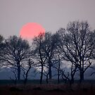 Misty Pink Sun by Jo Nijenhuis