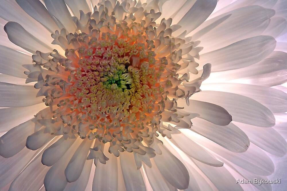 Luminous by Adam Bykowski