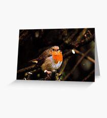 Cold, scruffy robin Greeting Card