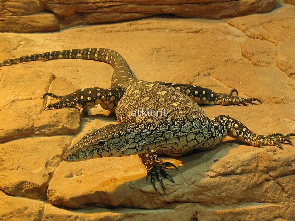 Lizard Dragon by atkinnt