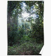 Harrington Rainforest Poster