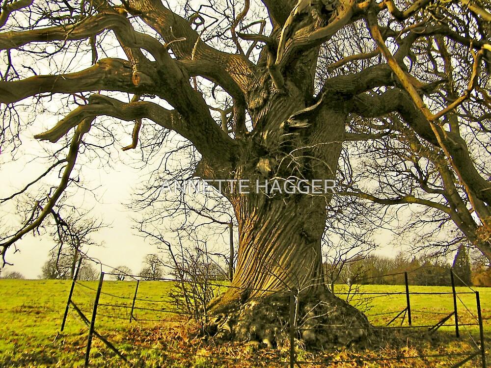 SWEET CHESTNUT TREE by ANNETTE HAGGER