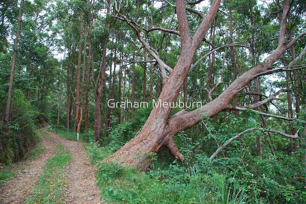 Leaning Tree by Graham Mewburn