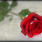 Red Rose by KathO