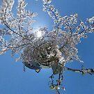 Little World Sakura by Michelle Dry