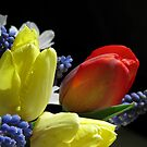 The Vibrance Of Spring by AngieDavies