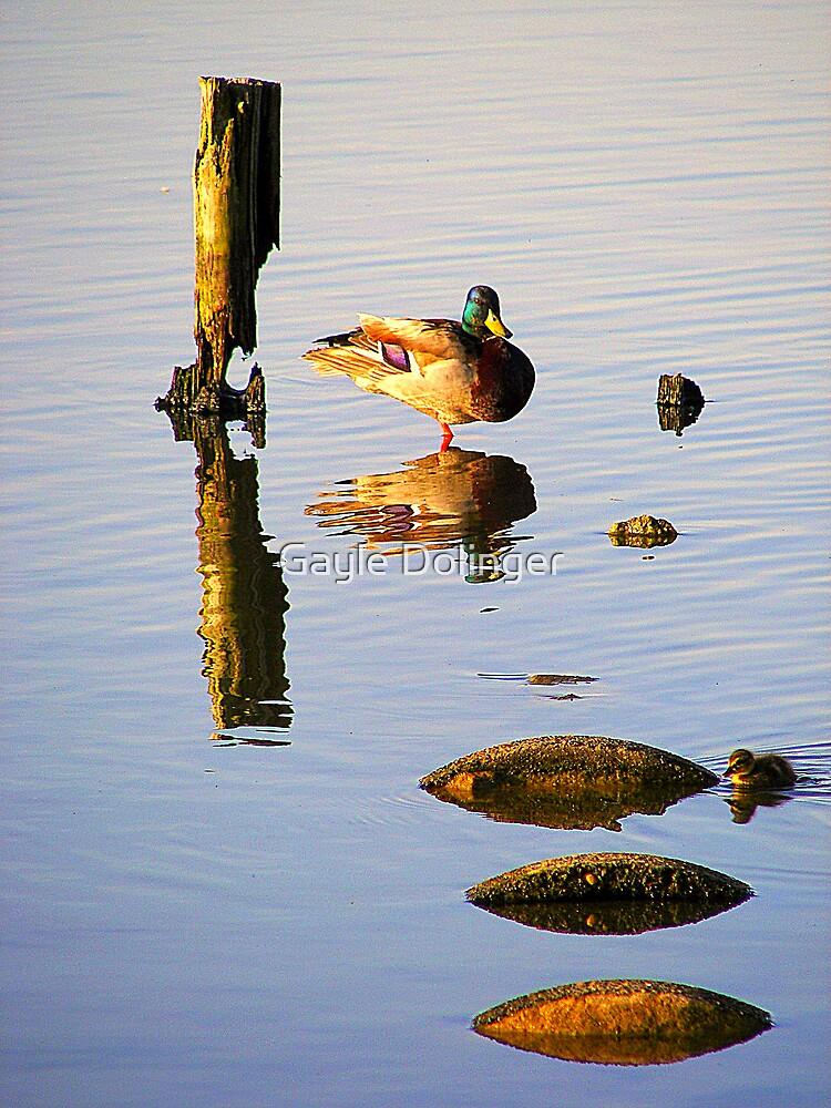 Morning Swim by Gayle Dolinger