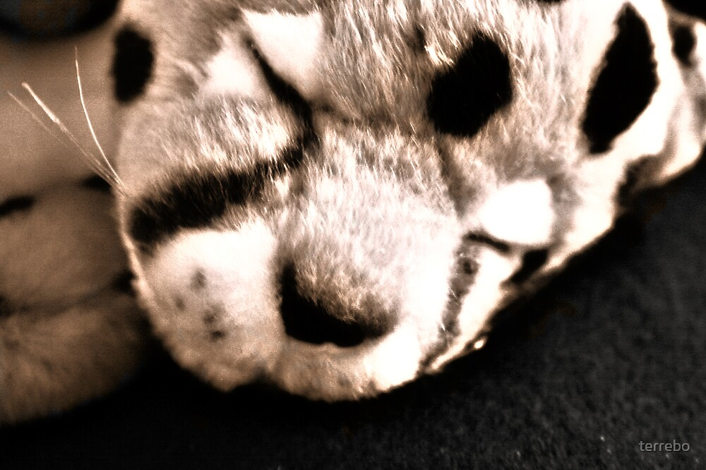 Slepping Tiger Cat by terrebo