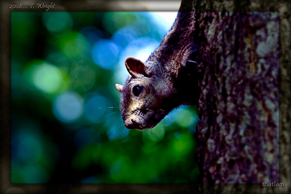 one day i met a squirrel by thatIam