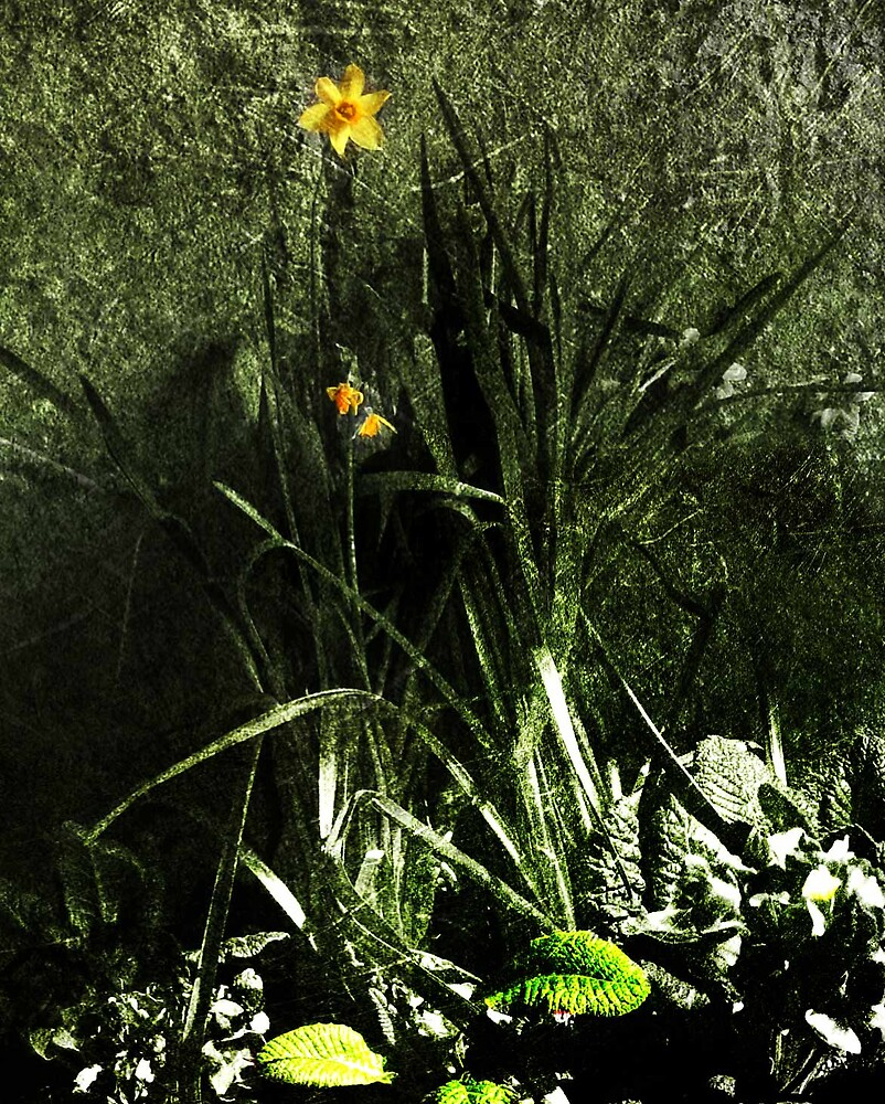 Flowers at Whitekirk by milton
