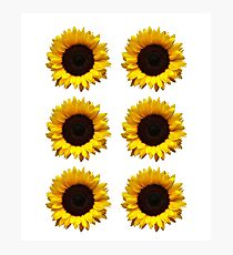 Six Sunflowers / Cute Animals Hipster Photographic Print