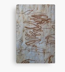 Scribbly Gum Patterns Canvas Print