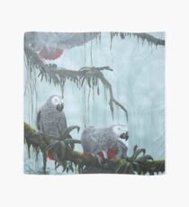 African grey Parrots. Flying free Scarf